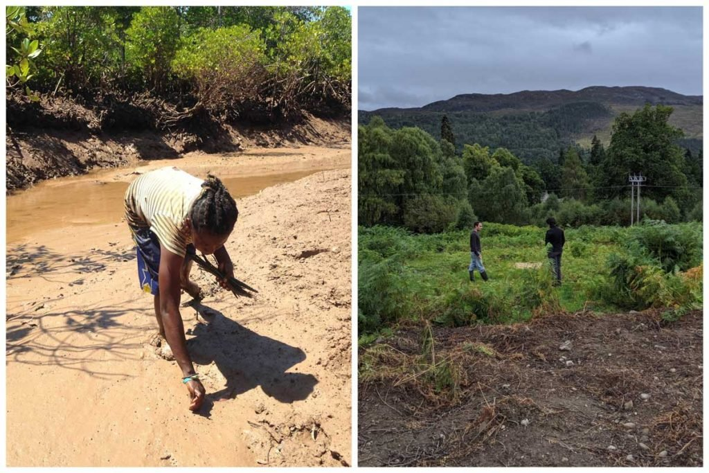mangrove planting in madagascar and reforesting baron land in dalry scotland